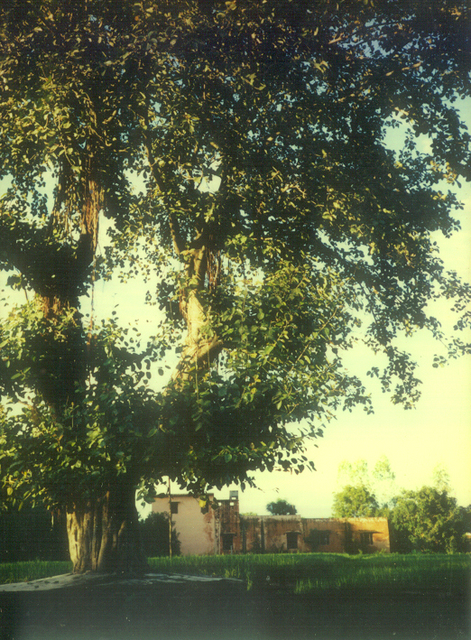 ashram_with_tree